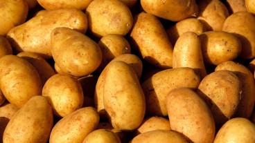 EVP sagt Ja zur Volksinitiative «Keine Spekulation mit Nahrungsmitteln!».