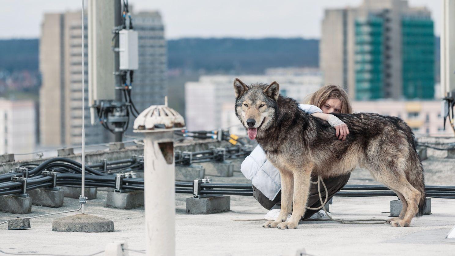 Frau wird Wolf, Wolf wird Frau: «Wild» zeigt eine eindringliche Umkehrung.